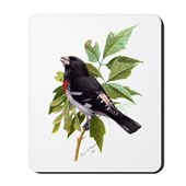 Rose-breasted Grosbeak Mousepad