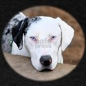 Sad Catahoula T-Shirt